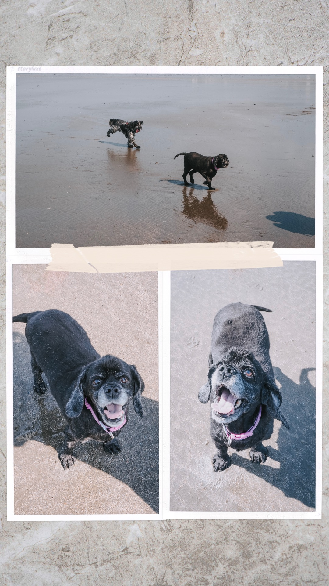 A Fresh Outlook On Blogging - dogs at the beach collage