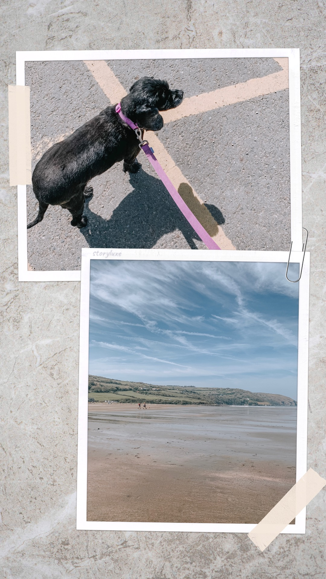 A Fresh Outlook On Blogging - dog & beach collage